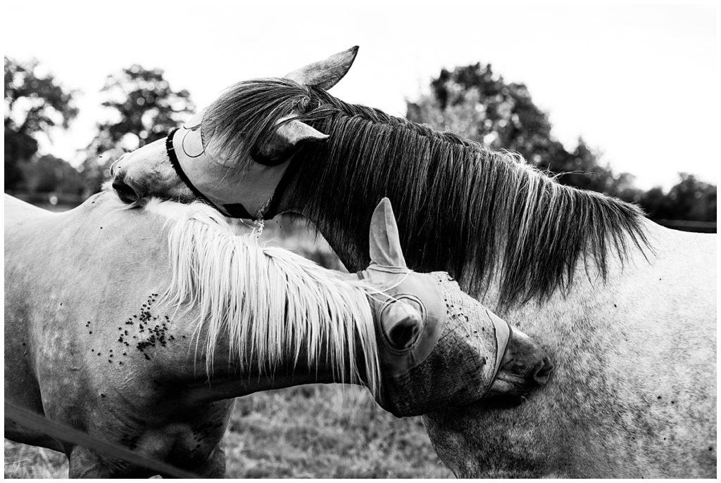 chevaux champ delaunay