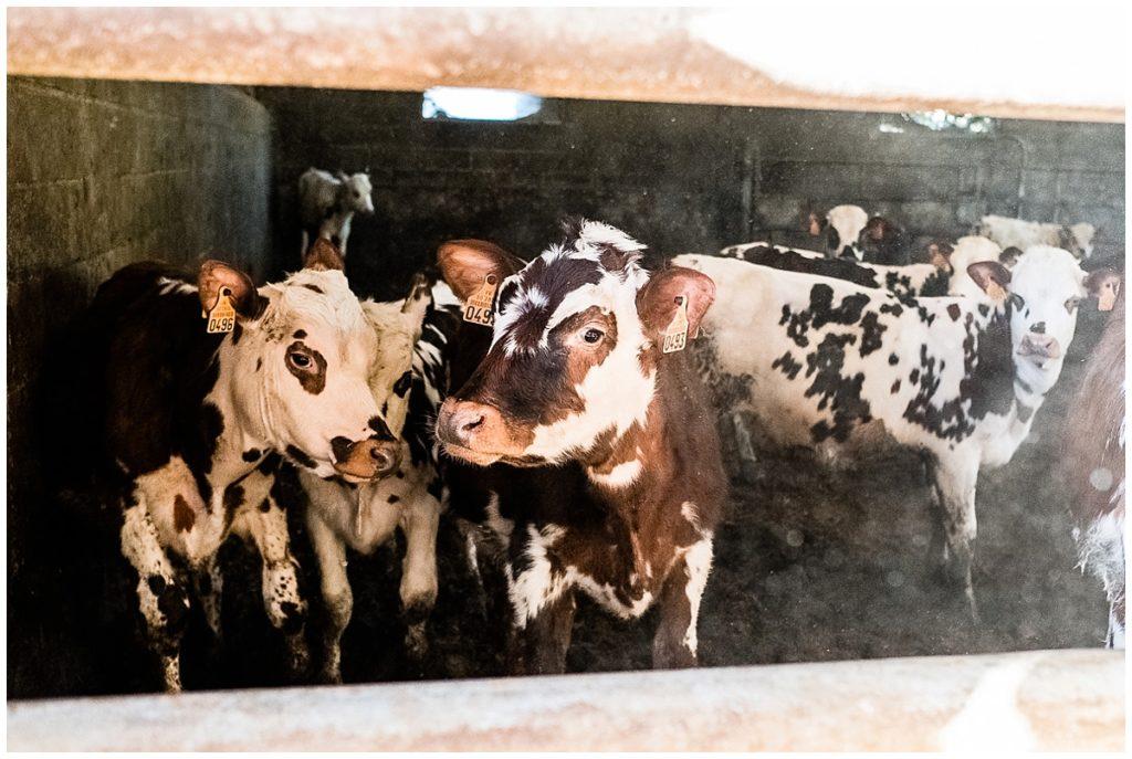 photographier un couple de veterinaires qui se marient a le ferme, par audrey guyon photographe