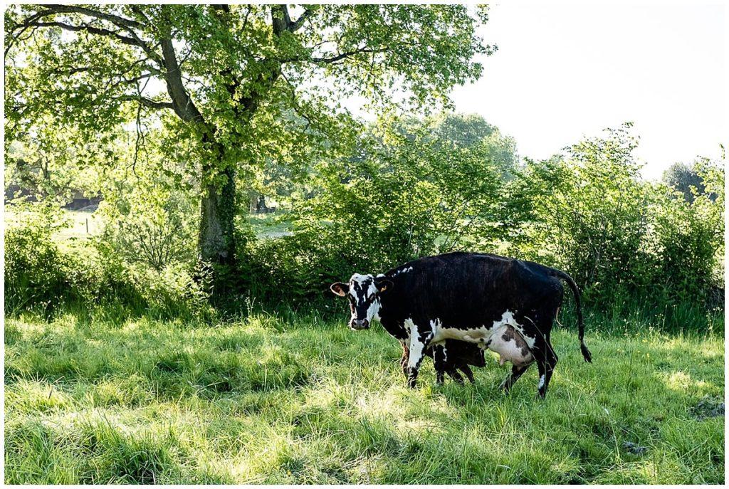 découvrez les photos de couple à la ferme de linda et grégory, par audrey guyon photographe