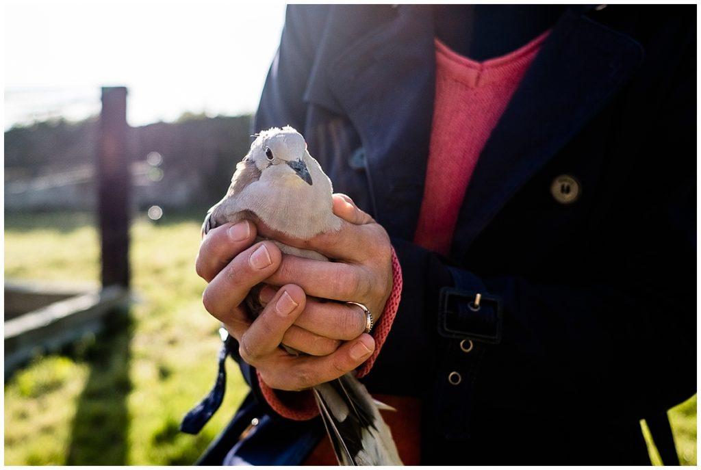 audrey guyon, photographe calvados, vous présente les photos de couple de deux vétérinaires normands